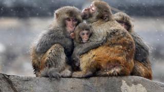 Ο σύγχρονος Μόγλης της Ινδίας: Η ασυνήθιστη φιλία ενός δίχρονου με μαϊμούδες