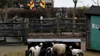 Βρετανία: Κάηκαν ζώα από πυρκαγιά σε ζωολογικό κήπο στο Λονδίνο (pics)