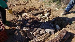 Έβρος: Επιστήμονες έφτιαξαν ειδικούς λάκκους για... φίδια