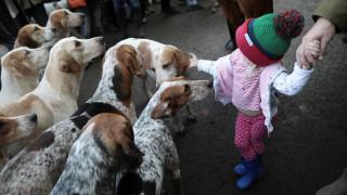 Πώς η συναναστροφή με σκύλους μειώνει τον κίνδυνο εμφάνισης άσθματος