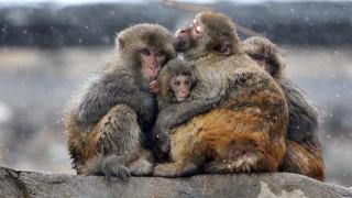 Βρετανία:13 μαϊμούδες έχασαν τη ζωή τους από φωτιά σε πάρκο σαφάρι