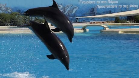 Γερμανικός οργανισμός μηνύει το Αττικό Ζωολογικό Πάρκο για το σόου με τα δελφίνια