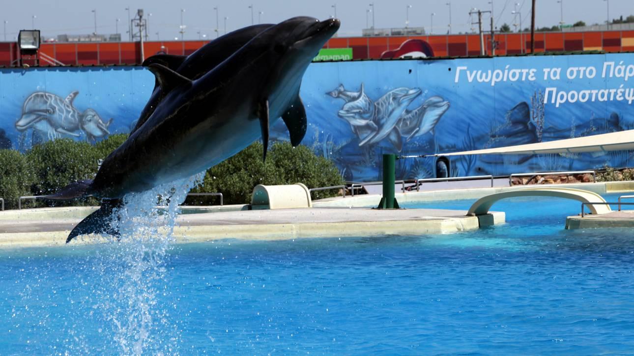 Τι απαντά το Αττικό Ζωολογικό Πάρκο στις καταγγελίες για το σόου με τα δελφίνια