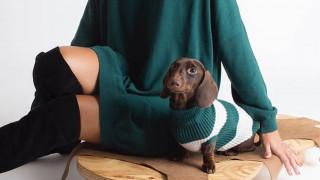 Dog A Porter: μόδα για κομψούς σκύλους από το Μιλάνο