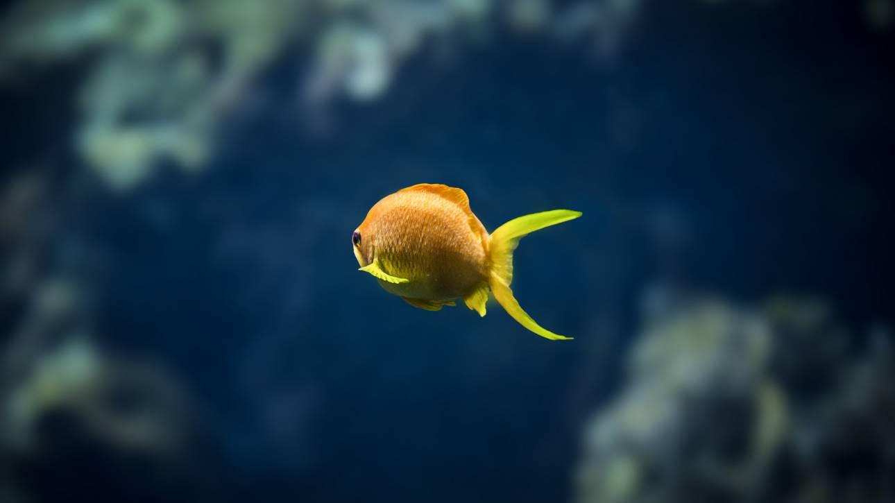 Η θάλασσα «χάνει την ανάσα της»: Δεκαπλασιάσθηκαν οι θάλασσες χωρίς οξυγόνο
