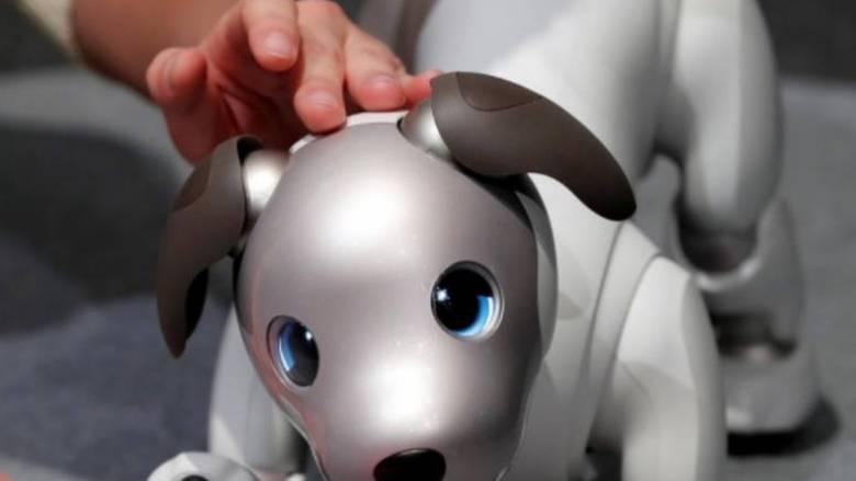 Υιοθετήθηκε ο νέος σκύλος - ρομπότ Άιμπο