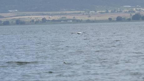Νεκρός εντοπίστηκε ένας από τους δύο ψαράδες στη λίμνη Μικρή Βόλβη