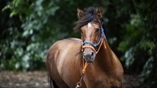 Σε καραντίνα το άλογο που χάρισε ο Εμανουέλ Μακρόν στον Σι Τζιπίνγκ