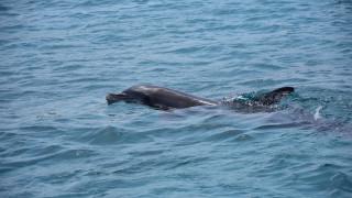 Χταπόδι έπνιξε δελφίνι την ώρα που το έτρωγε: Ένας θάνατος που απασχόλησε τους επιστήμονες