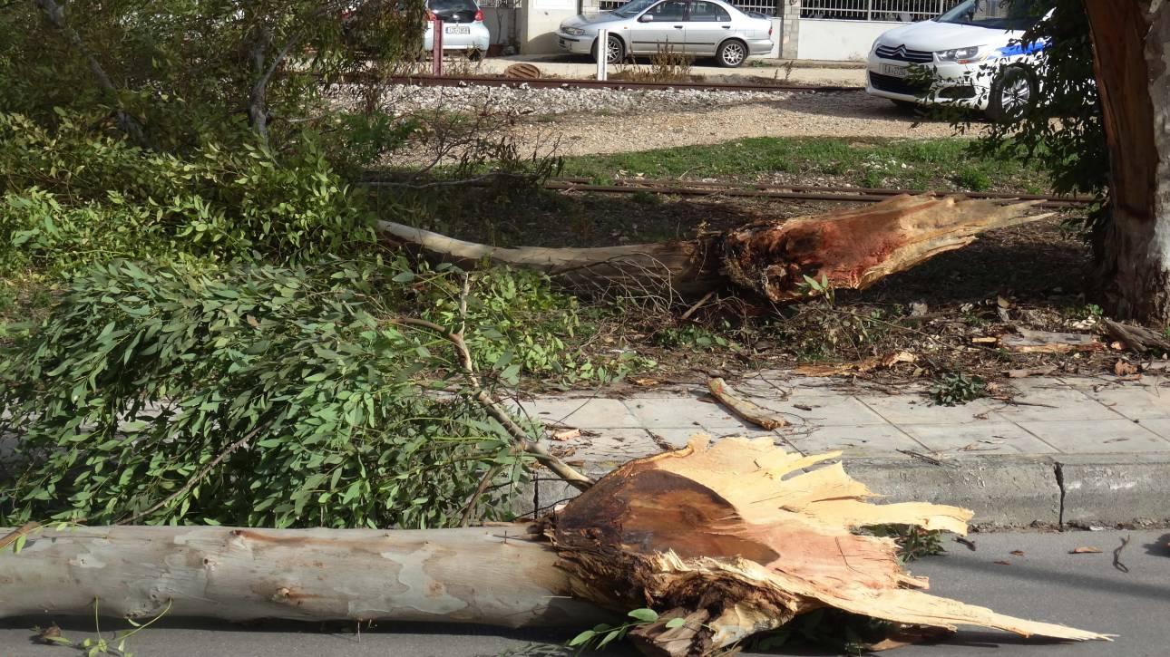 Αρκετά τα προβλήματα από τους ισχυρούς ανέμους στη Λάρισα