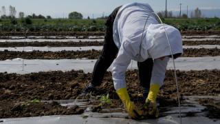 Αγροτικός τομέας: Πώς μπορούν να μειωθούν οι δαπάνες και να αυξηθεί η ανταγωνιστικότητα