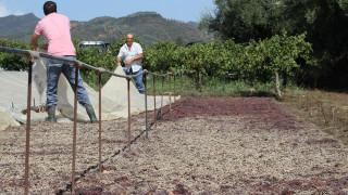 Αγροτικός τομέας: Πώς γίνεται να μειωθούν οι δαπάνες και να αυξηθεί η ανταγωνιστικότητα
