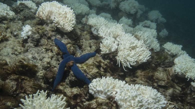 Η Αυστραλία ανακοίνωσε πρόγραμμα προστασίας του Μεγάλου Κοραλλιογενούς Υφάλου