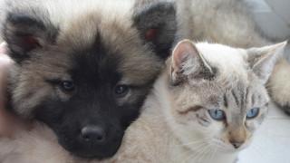 Σύντομα σε διαβούλευση το σχέδιο για την προστασία των ζώων συντροφιάς