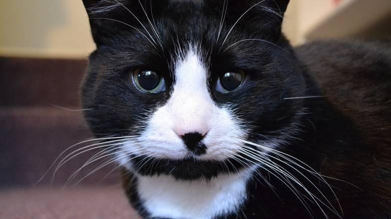 Γάτος που είχε εξαφανιστεί πριν εννέα χρόνια επέστρεψε στην οικογένειά του!