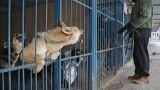 Ρωσία: Σκύλος πυροβόλησε θανάσιμα κυνηγό