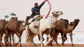 Καμήλες αποκλείστηκαν από διαγωνισμό ομορφιάς λόγω… μπότοξ