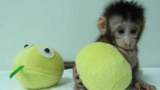 Κλωνοποιήθηκαν οι πρώτες μαϊμούδες...σειρά έχει ο άνθρωπος