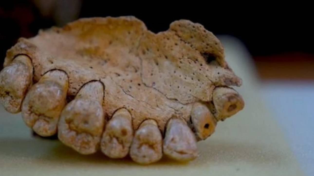 Μια γνάθος αποδεικνύει την πραγματική ηλικία του Homo Sapiens