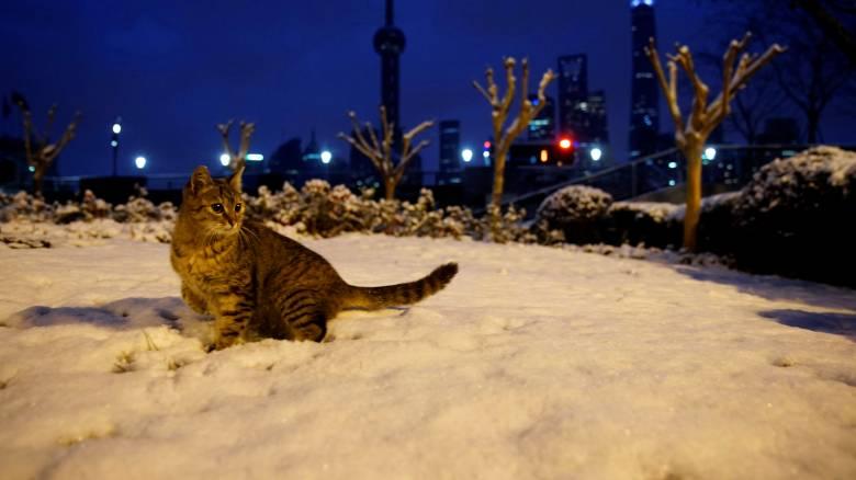 Τα ζώα στο Καζακστάν παγώνουν κυριολεκτικά από το κρύο: Στους -57 Κελσίου το θερμόμετρο (vid)