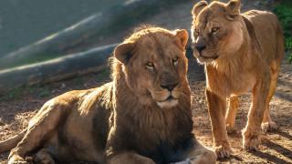 Πόσο επηρεάζει η ανθρώπινη δραστηριότητα την κινητικότητα των άγριων ζώων