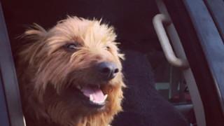 Αυστραλία: Σκύλος έκανε 1.500χλμ με... ωτοστόπ