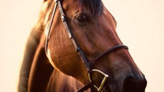 Σαββατοκύριακο για ιππασία και πεζοπορία στην Αρκαδία