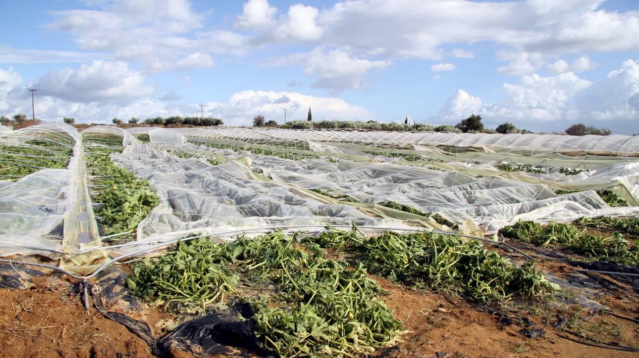 ΕΛΓΑ: Σήμερα καταβάλλονται οι αποζημιώσεις σε αγρότες και κτηνοτρόφους