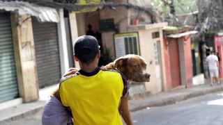 Ποιοι κινδυνεύουν περισσότερο από ένα δάγκωμα σκύλου