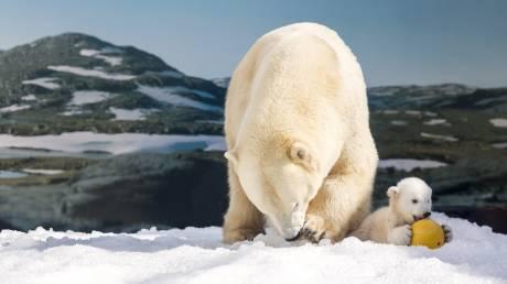 Το τέλος των πολικών αρκούδων πλησιάζει