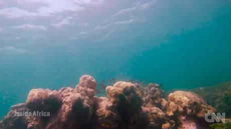 Πώς οι σαγιονάρες καταστρέφουν τον ωκεανό