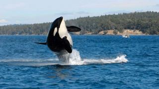 Θαλάσσια μόλυνση: Η έκκληση των επιστημόνων για τη σωτηρία των θαλάσσιων «γιγάντων»
