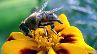 Γυναίκα στην Κρήτη πέθανε από τσίμπημα μέλισσας
