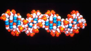 Βάση δεδομένων ταυτοποίησης DNA για τους Έλληνες πεσόντες στην Αλβανία