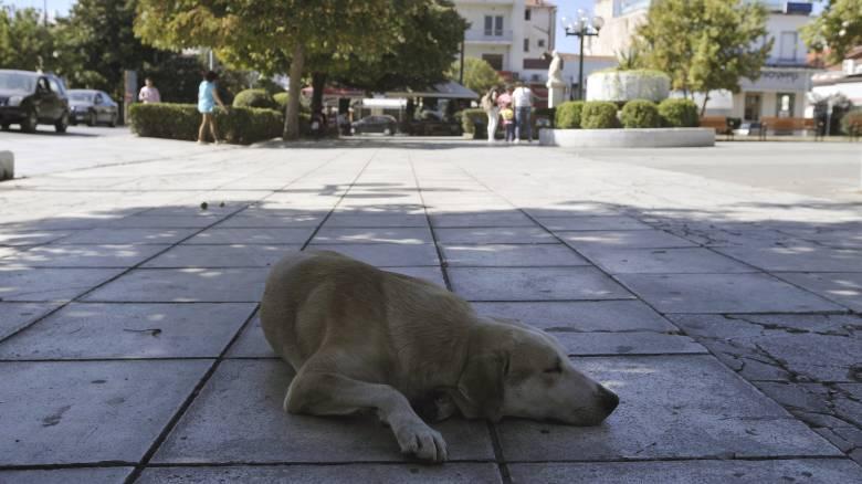 Αποσύρθηκε η τροπολογία Τσιρώνη για τα αδέσποτα ζώα