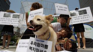 Σφαγές σκύλων, μια βάρβαρη πρακτική που ρίχνει τη σκιά της στους Χειμερινούς Ολυμπιακούς Αγώνες