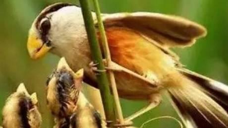 Σπάνιο είδος πτηνού εμφανίστηκε στην Κίνα