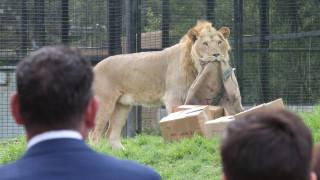 Νότια Αφρική: Λιοντάρια κατασπάραξαν λαθροθήρα
