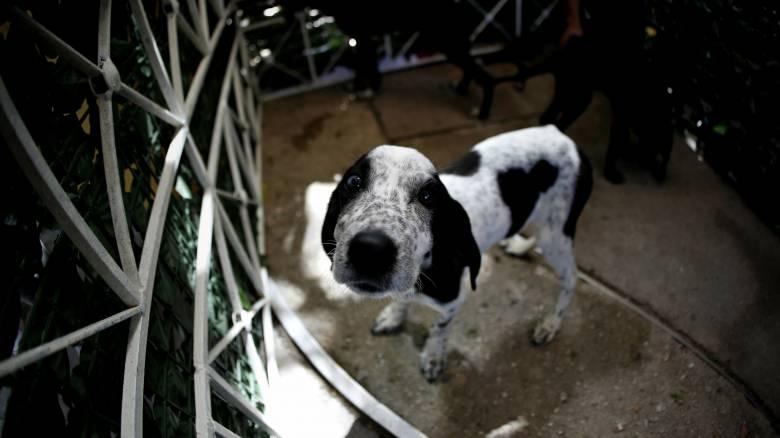 Καλαμάτα: Κλώτσησε σκύλο και τιμωρήθηκε με ένα χρόνο φυλάκιση και «τσουχτερό» πρόστιμο