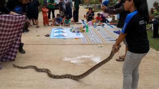 Τζακάρτα: Η… επέλαση των φιδιών και οι λόγοι που την προκάλεσαν