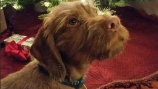 Κάνσας: Ο σκύλος που ήθελε να γίνει κυβερνήτης