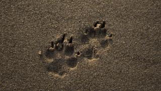 Μεσσήνη: Θύμα πρωτοφανούς βίας έπεσε ένας σκύλος σε παραλία της Μπούκας