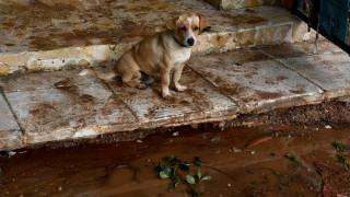 Ζάκυνθος: Παραδειγματική τιμωρία για 46χρονο που σκότωσε τον σκύλο του