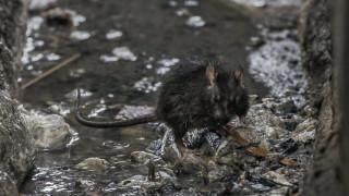 Ειδική αποστολή στα νησιά της Νέας Ζηλανδίας για την εξολόθρευση 200.000 ποντικιών