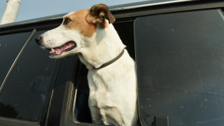 Από τη Γερμανία βρέθηκε στην Ελβετία: Η εξάμηνη περιπέτεια της σκυλίτσας Ραπουνζέλ