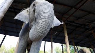 «Φως» στο DNA αρχαίων και σημερινών ελεφάντων με επικεφαλής Ελληνίδα επιστήμονα