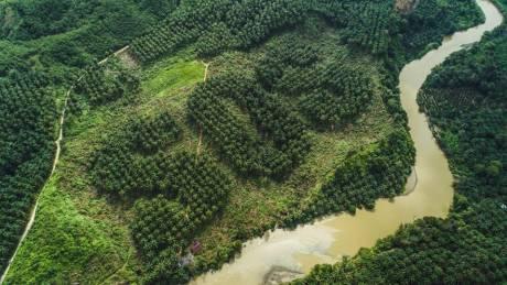Το φοινικόδασος της Σουμάτρα εκπέμπει.. SOS