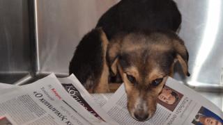 Πυροβόλησαν και σκότωσαν τρία σκυλάκια στο Λαύριο-Επικηρύχθηκε ο δράστης