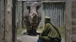 Άρρωστος ο τελευταίος αρσενικός λευκός ρινόκερος του κόσμου - Φόβοι για την εξαφάνιση του είδους