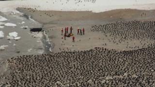 Τεράστια αποικία πιγκουίνων  εντοπίστηκε στην Ανταρκτική